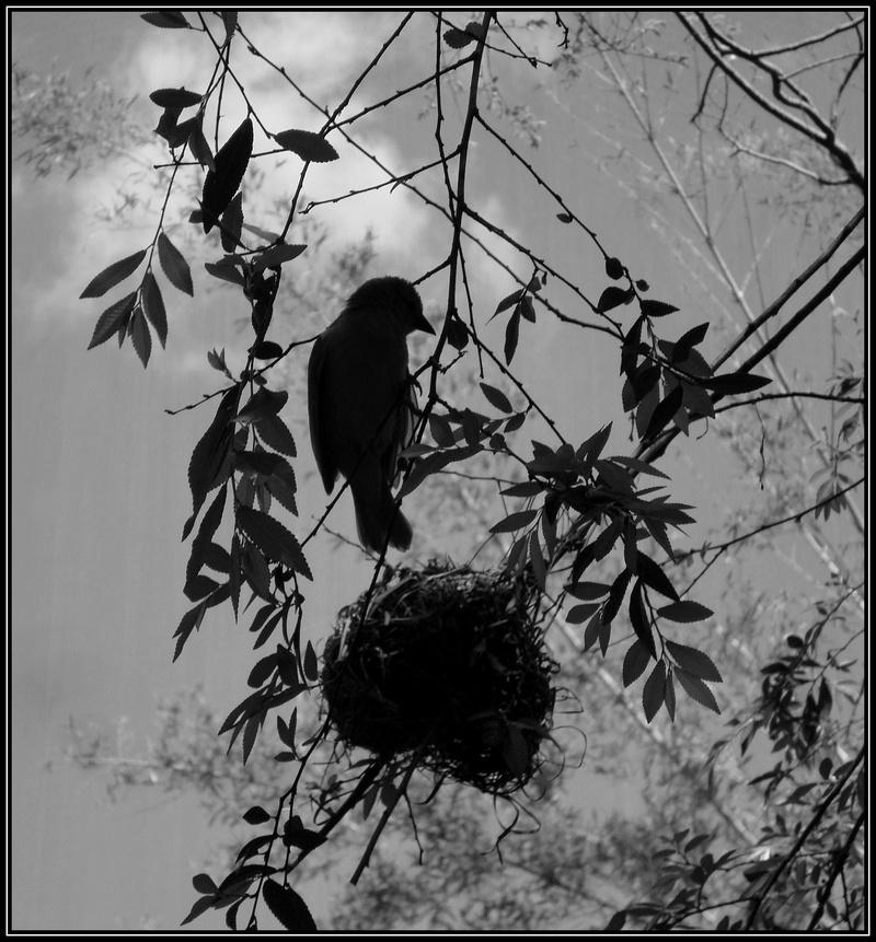 [Ouvert] FIL - Oiseaux. - Page 3 Xflori10