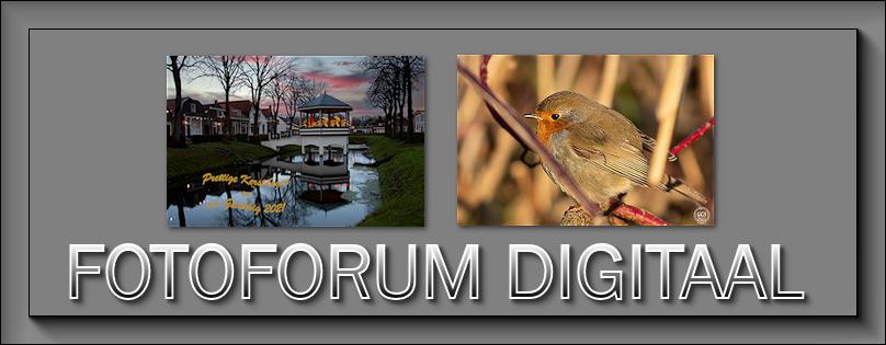 Fotoforum Digitaal - Portal Decemb11