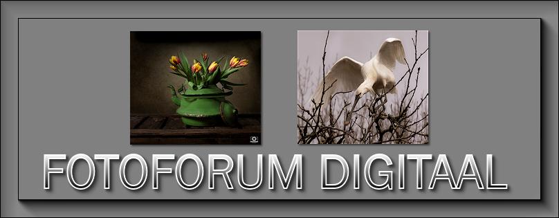 Fotoforum Digitaal - Portal Maart_12