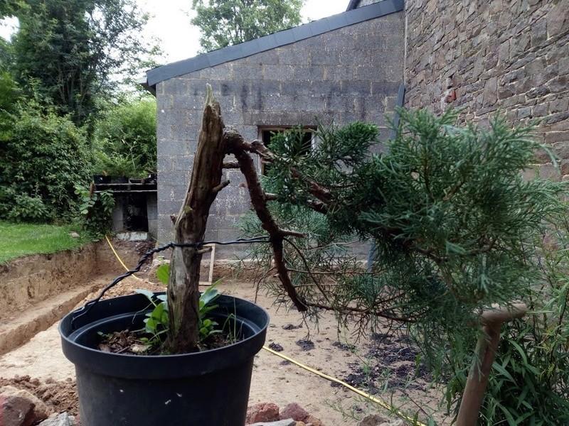 arbres à céder (2017) Img_2032