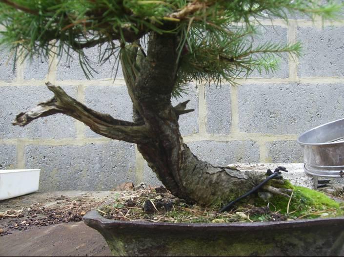 quelques arbres à céder... Pictur19