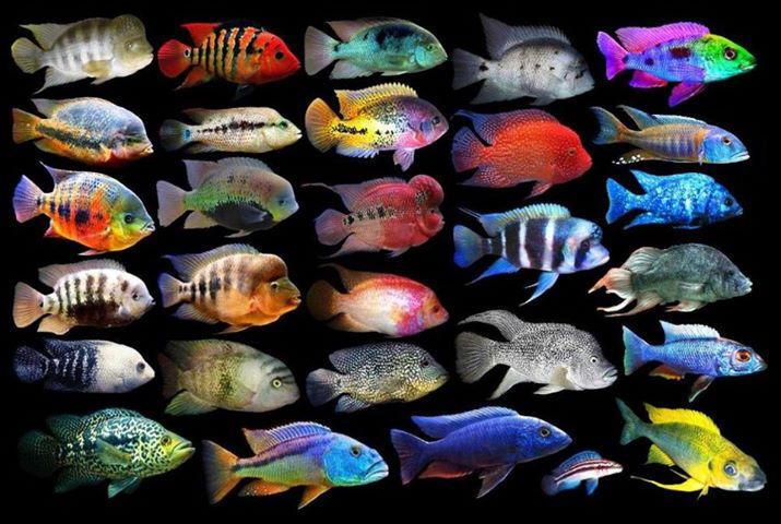 Respiração dos peixes . Saiba tudo aqui  Tipos-10