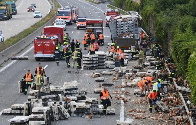 Des milliers de poules bloquent une autoroute autrichienne  648x4110