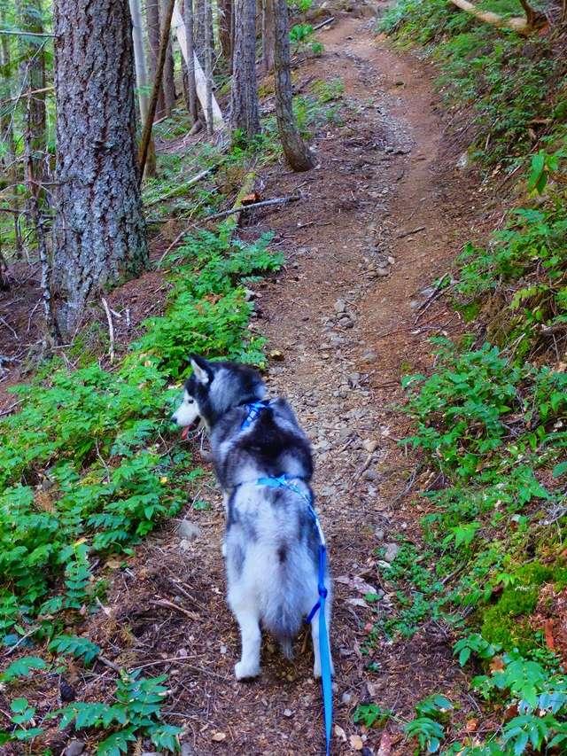 Hiking with Dogs: Mt. Townsend, Olympic Peninsula, WA Dscf0812