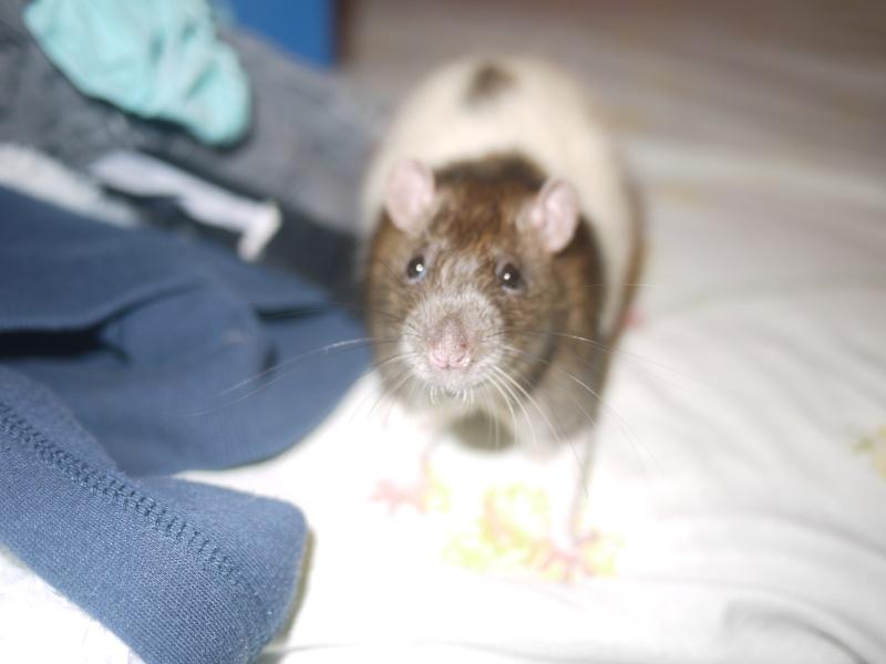 mes ratous ! P1070012