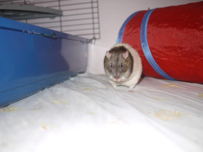 mes ratous ! P1070014