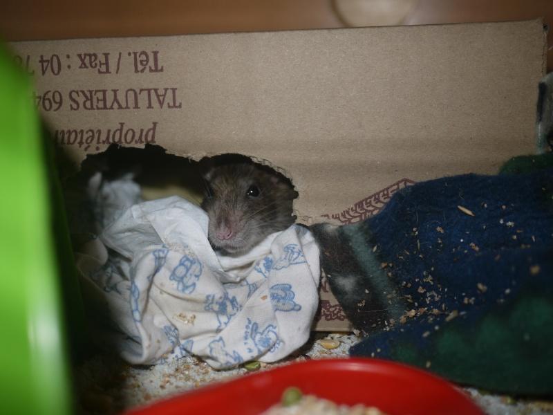 mes ratous ! P1070022