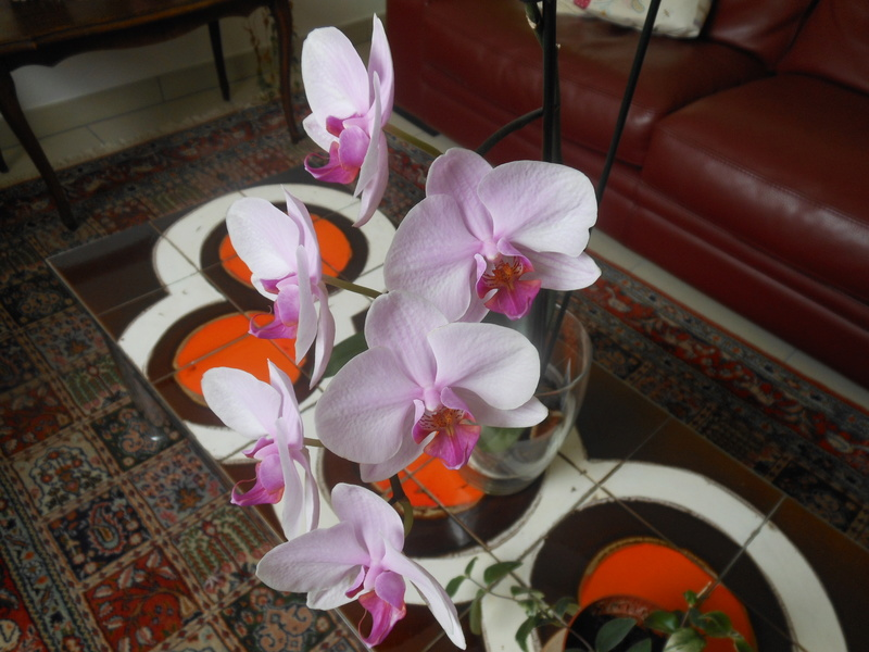 floraisons des orchidées - Page 42 Dscn7014