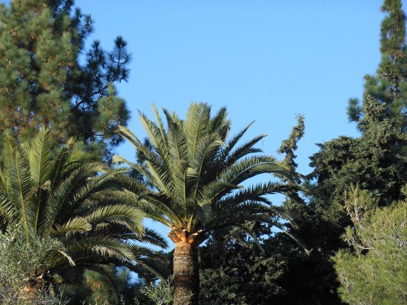 les palmiers préférés Le_roi10