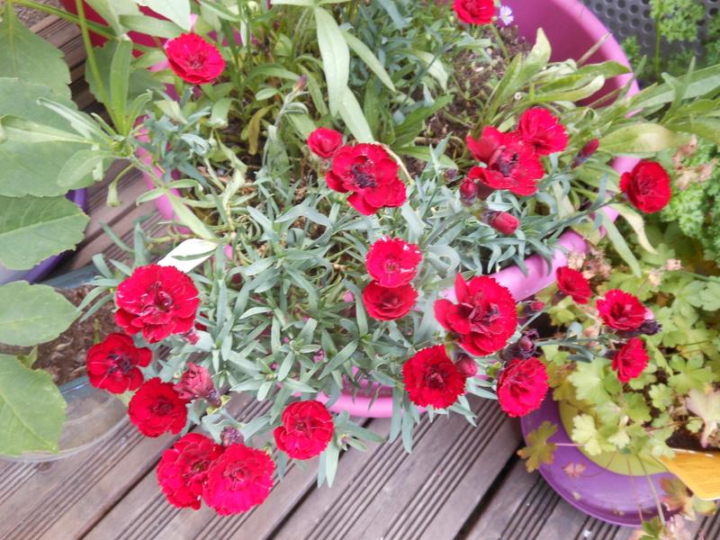 de belles idées d'arrangements floraux en pots Oeille10