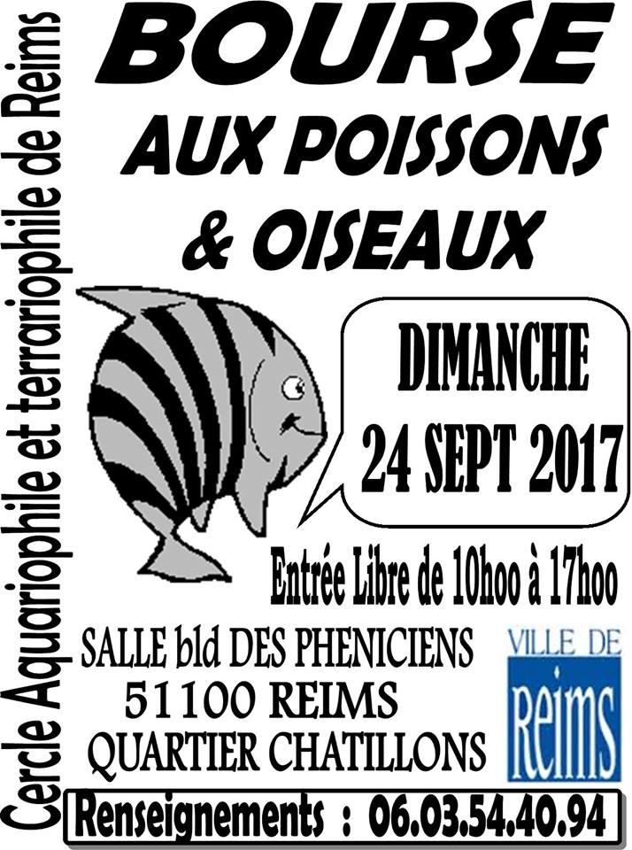 REIMS (51) - BOURSE aux POISSONS et OISEAUX - 24 Sept 2017 Reims10