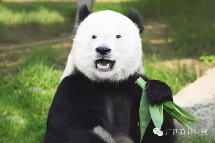 """""""Vingt Dieux"""" !!!  - Page 3 Panda10"""