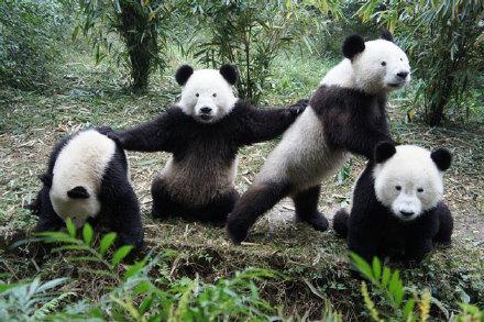 """""""Vingt Dieux"""" !!!  - Page 3 Panda_11"""