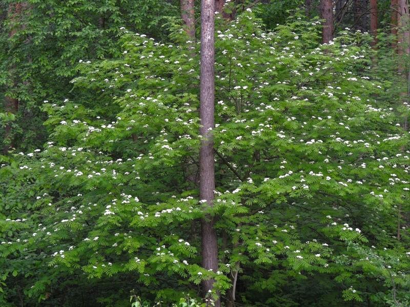 Фотографии цветов и деревьев - Страница 15 Dscn6812