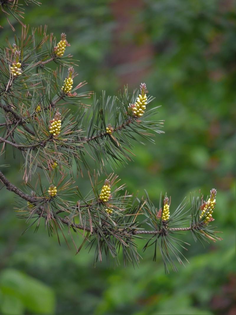 Фотографии цветов и деревьев - Страница 15 Dscn6813