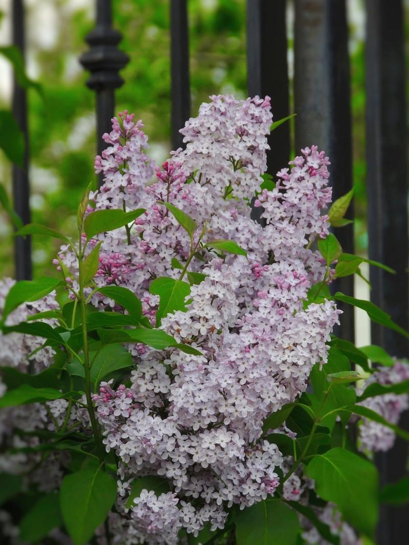 Фотографии цветов и деревьев - Страница 15 Dscn7112