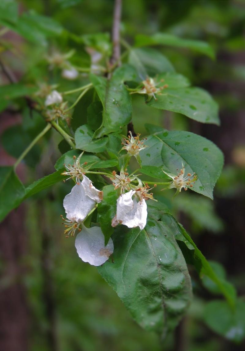 Фотографии цветов и деревьев - Страница 15 Dscn7114