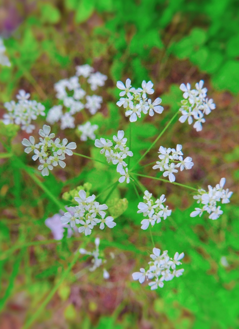 Фотографии цветов и деревьев - Страница 15 Dscn7210