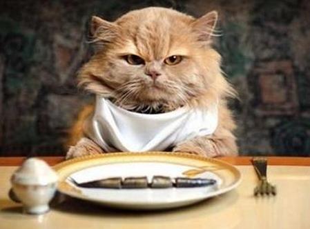 Que mangez vous aujourd'hui ? Chat-c11