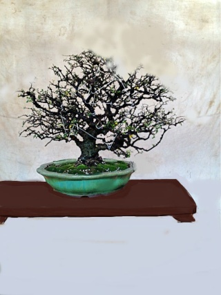 Does this pot and tree cobination work for you. Untitl20