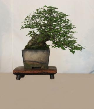 Antique (Non Bonsai) Tables for Bonsai Untitl34