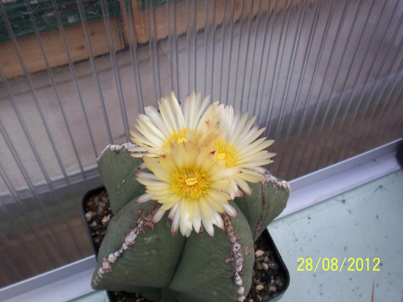 Cacti and Sukkulent in Köln, every day new flowers in the greenhouse Part 30   Bild1011