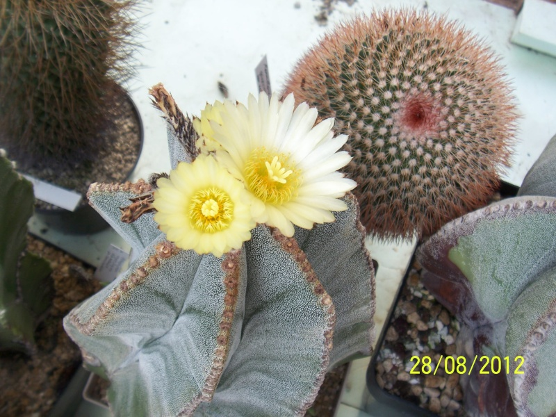Cacti and Sukkulent in Köln, every day new flowers in the greenhouse Part 30   Bild1017