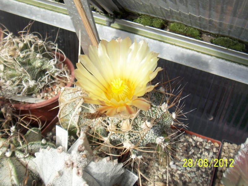 Cacti and Sukkulent in Köln, every day new flowers in the greenhouse Part 30   Bild1018