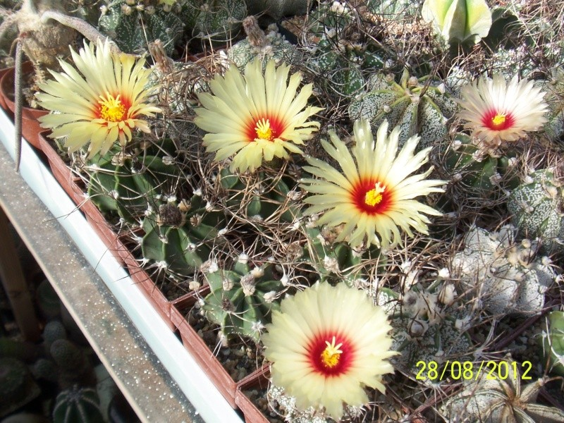 Cacti and Sukkulent in Köln, every day new flowers in the greenhouse Part 30   Bild1022