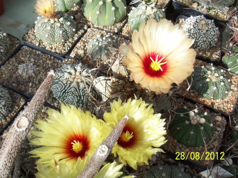 Cacti and Sukkulent in Köln, every day new flowers in the greenhouse Part 30   Bild1023