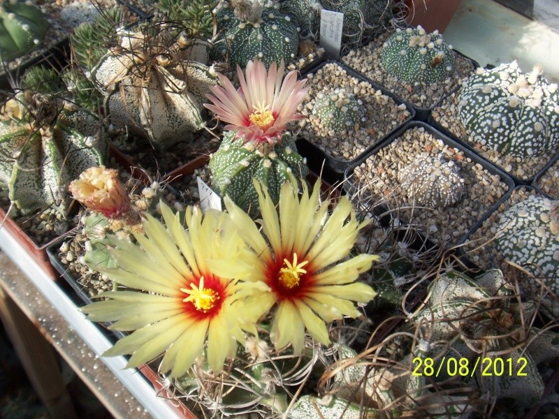 Cacti and Sukkulent in Köln, every day new flowers in the greenhouse Part 30   Bild1034
