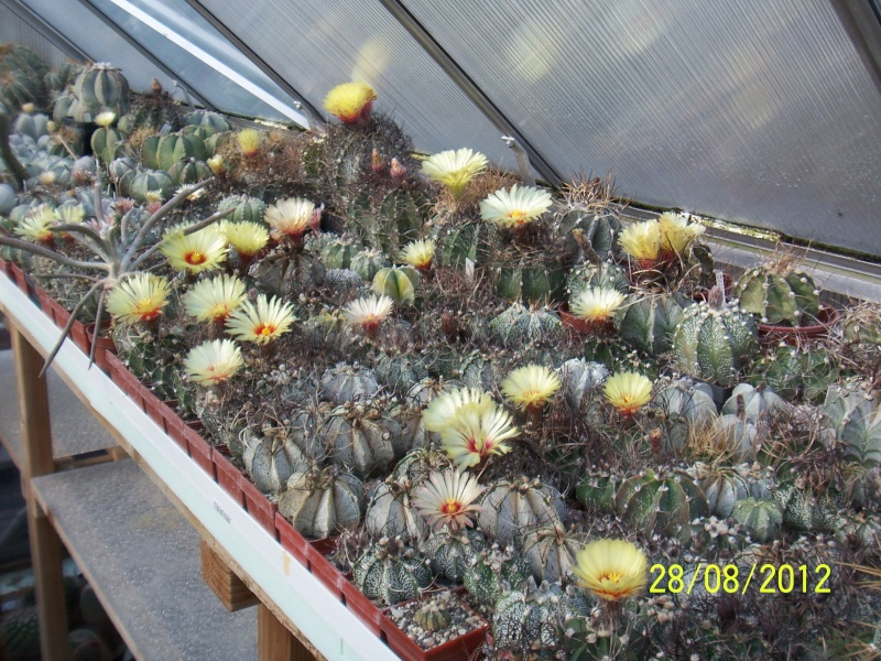 Cacti and Sukkulent in Köln, every day new flowers in the greenhouse Part 30   Bild1044