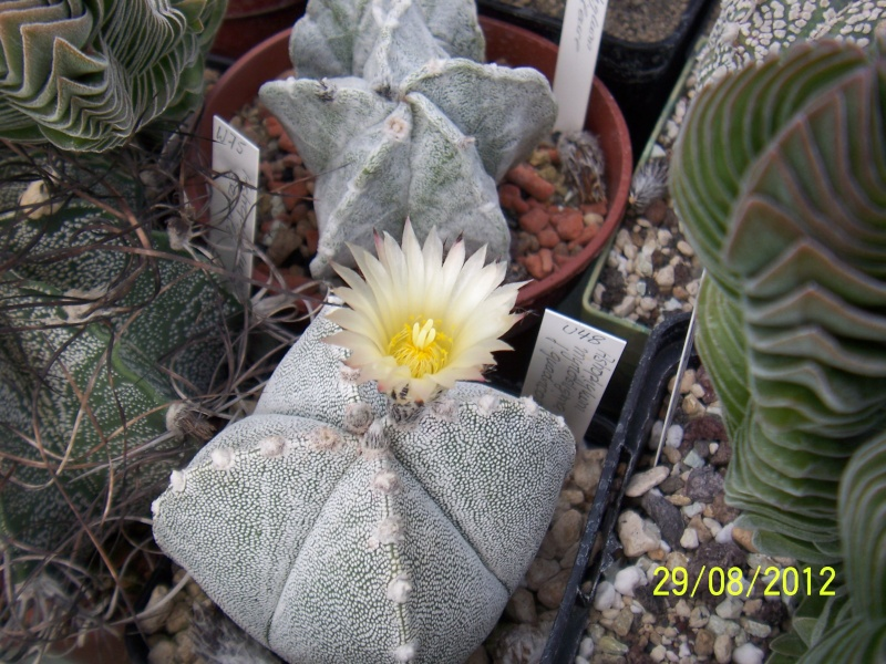Cacti and Sukkulent in Köln, every day new flowers in the greenhouse Part 31 Bild1056