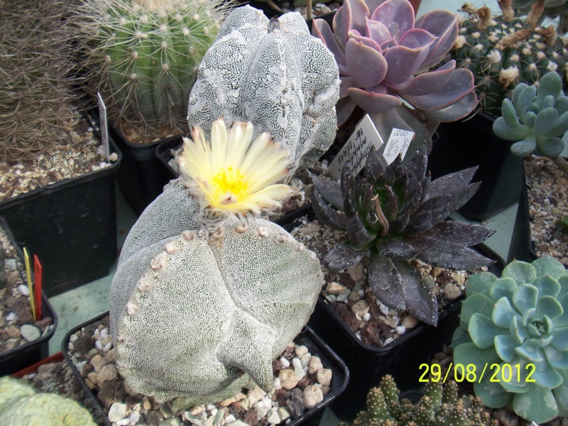 Cacti and Sukkulent in Köln, every day new flowers in the greenhouse Part 31 Bild1057