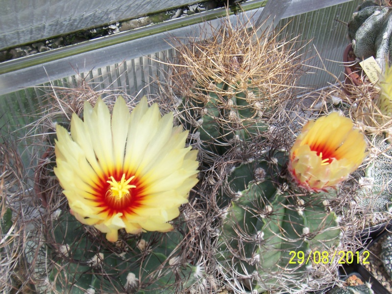 Cacti and Sukkulent in Köln, every day new flowers in the greenhouse Part 31 Bild1079