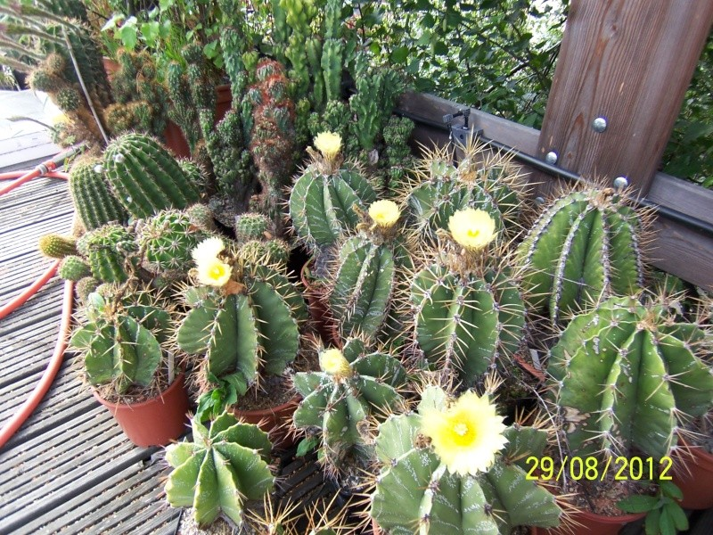 Cacti and Sukkulent in Köln, every day new flowers in the greenhouse Part 31 Bild1095