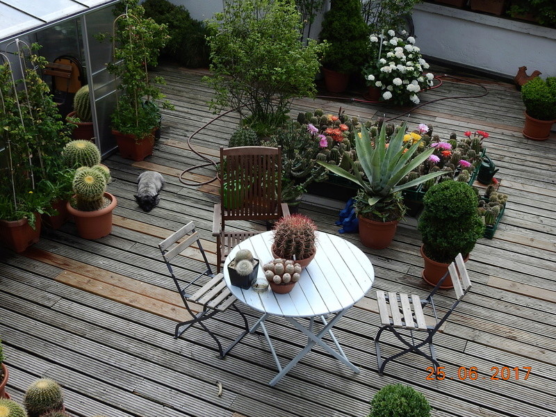 Cacti and Sukkulent in Köln, every day new flowers in the greenhouse Part 166 Bild1221
