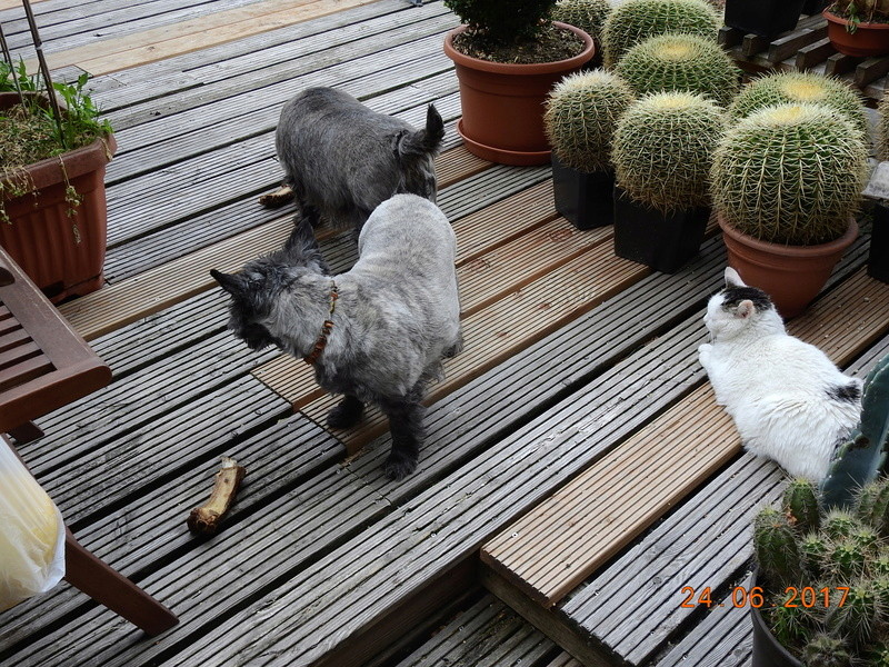 Cacti and Sukkulent in Köln, every day new flowers in the greenhouse Part 166 Bild1223
