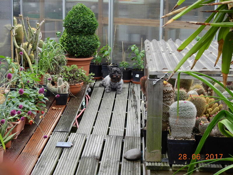 Cacti and Sukkulent in Köln, every day new flowers in the greenhouse Part 167 Bild1245
