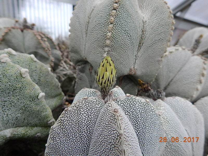 Cacti and Sukkulent in Köln, every day new flowers in the greenhouse Part 167 Bild1246