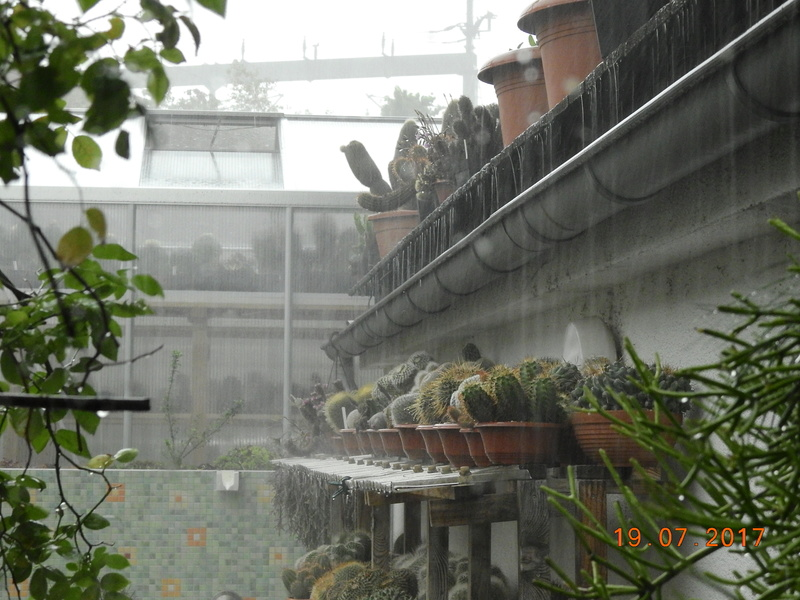 Cacti and Sukkulent in Köln, every day new flowers in the greenhouse Part 169 Bild1552