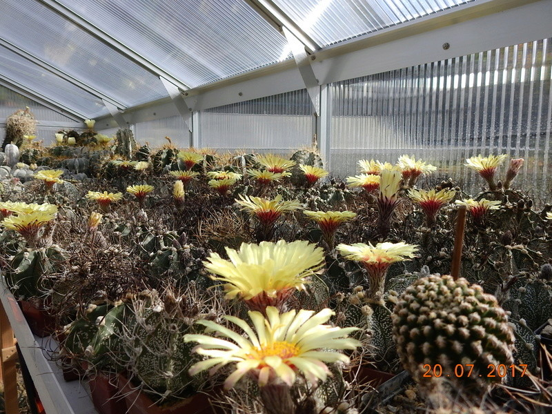 Cacti and Sukkulent in Köln, every day new flowers in the greenhouse Part 169 Bild1562