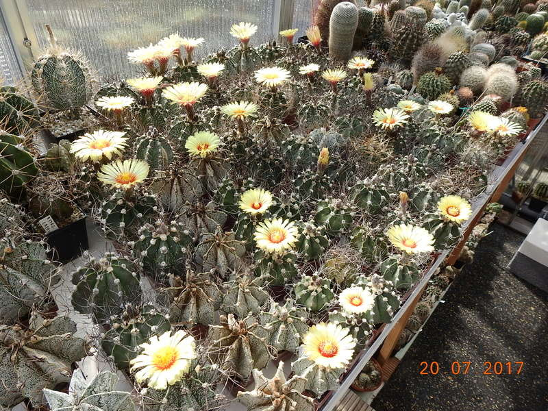 Cacti and Sukkulent in Köln, every day new flowers in the greenhouse Part 169 Bild1563