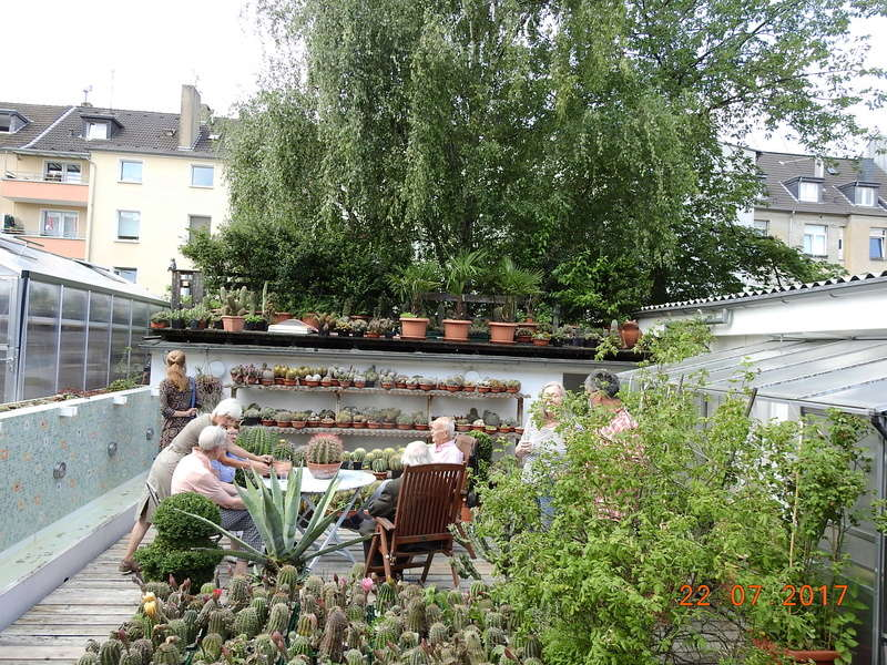 Cacti and Sukkulent in Köln, every day new flowers in the greenhouse Part 169 Bild1590