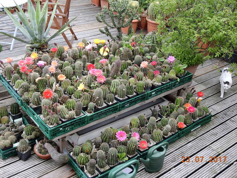 Cacti and Sukkulent in Köln, every day new flowers in the greenhouse Part 169 Bild1600