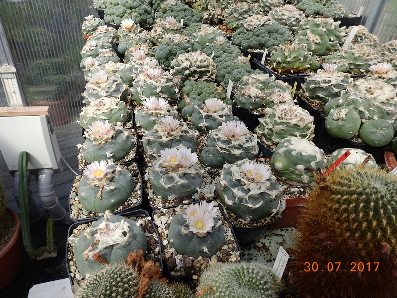 Cacti and Sukkulent in Köln, every day new flowers in the greenhouse Part 170 Bild1675
