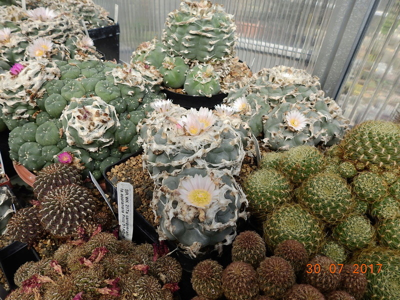 Cacti and Sukkulent in Köln, every day new flowers in the greenhouse Part 170 Bild1678