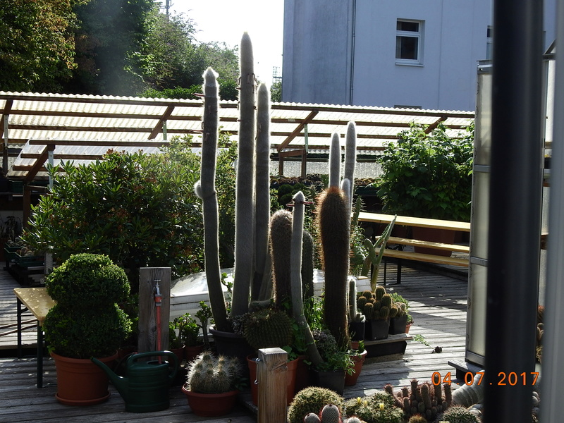Cacti and Sukkulent in Köln, every day new flowers in the greenhouse Part 171 Bild1803