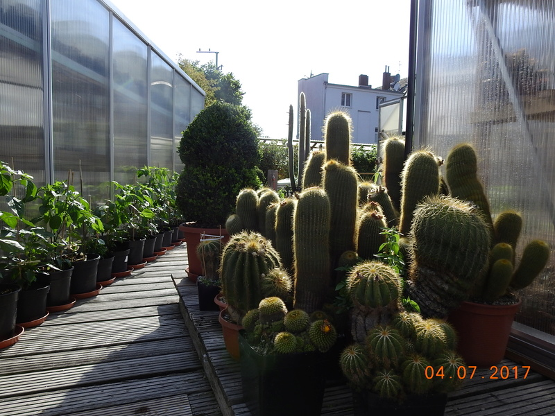 Cacti and Sukkulent in Köln, every day new flowers in the greenhouse Part 171 Bild1804