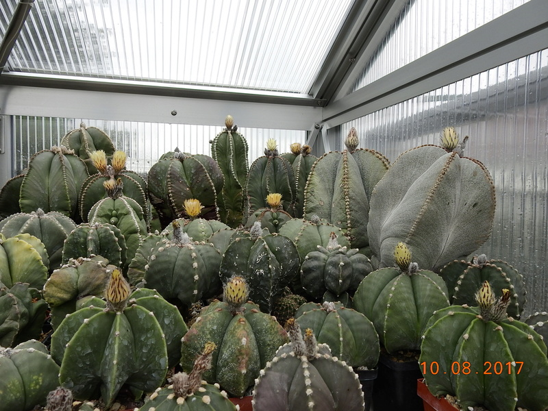Cacti and Sukkulent in Köln, every day new flowers in the greenhouse Part 171 Bild1821
